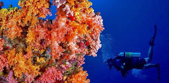 Corals themselves are animals that are related to sea anemones.