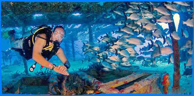 fun Diving in Maafushi