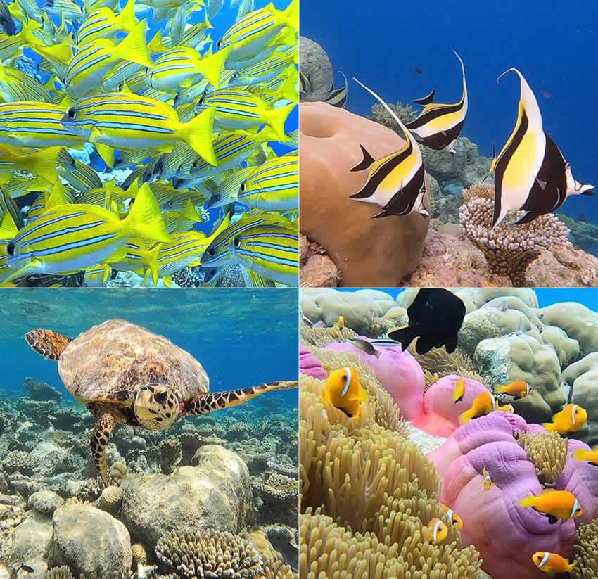 Amari Havodda house reef