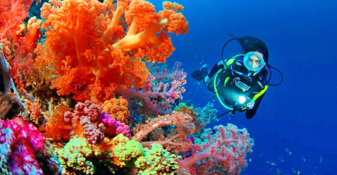 10 Best Dive Sites in Maldives. Where to Go Scuba Diving in Maldives, coral, fish, marine life, whale shark, mantas
