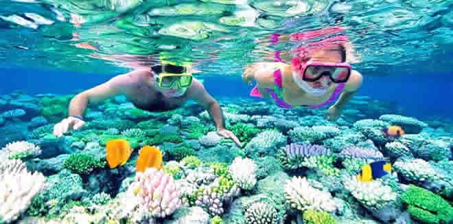 Want to snorkel with manta rays, whale sharks and sea turtles or maybe above scenic house reef on your next budget trip in the Maldives?