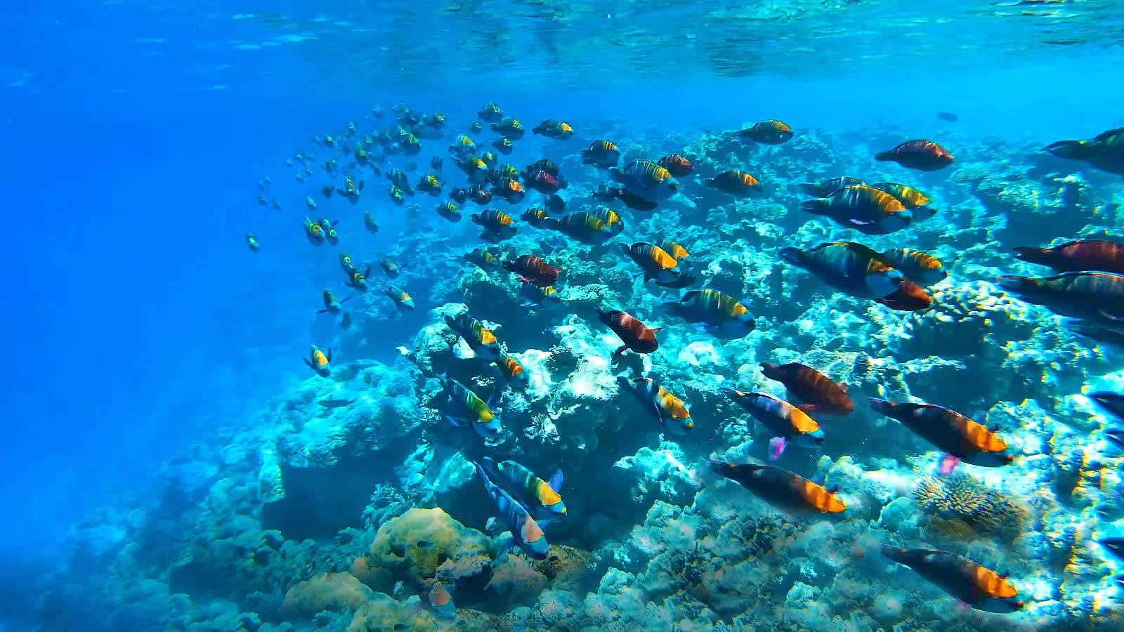 house reef snorkeln in WA Maldives