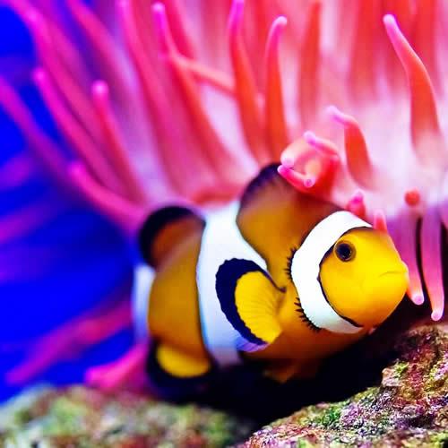 Рыбы Кораллового Рифа