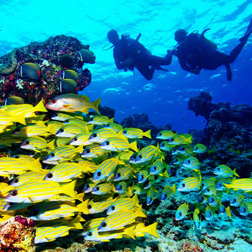 top 10 best dive sites in the maldives