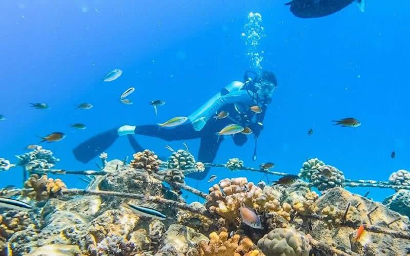 Fushifaru Maldives Воссоздает Коралловый Риф в форме Манта