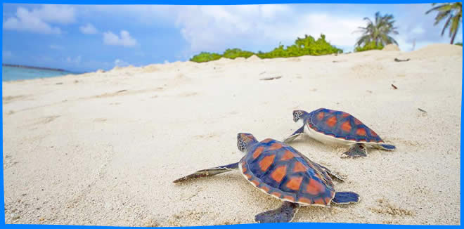Gulhi maldives budget trip