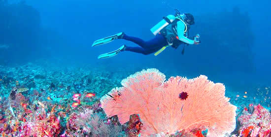 Scuba Diving in Huvadhoo Atoll