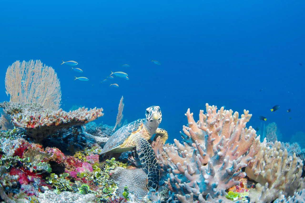 six senses laamu  marine life