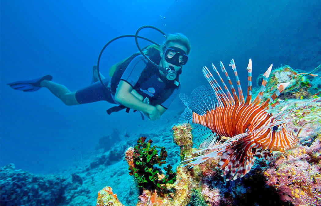 lion fish hunting underwater