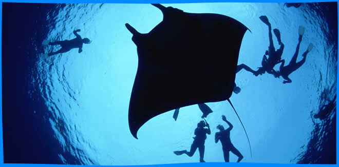 Manta Rays Maldives, magazine, Where and When to See Manta in the Maldives, diving with manta rays, snorkel with Manta Ray, best time to see