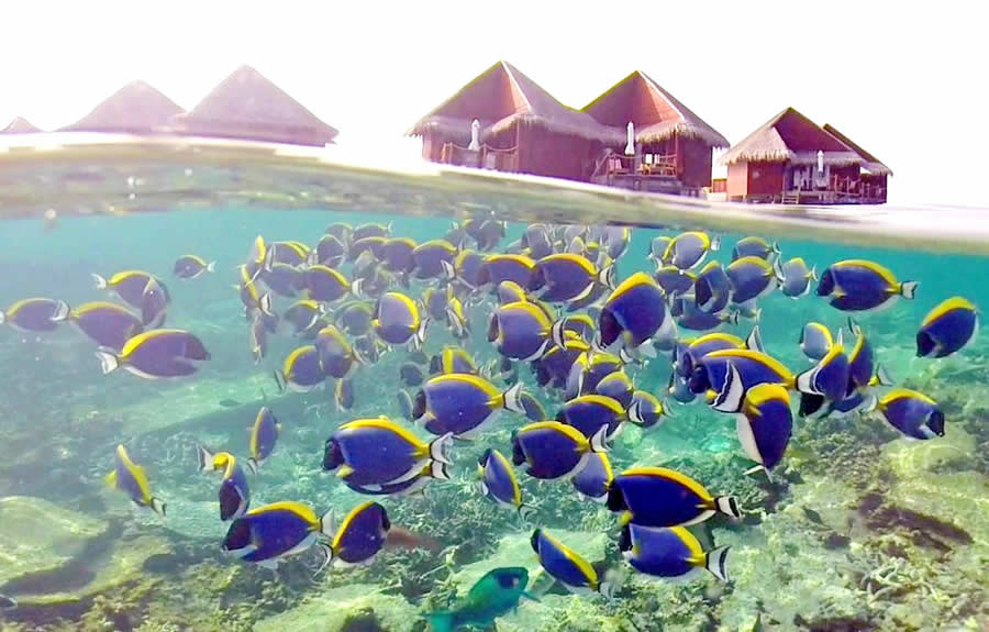 fish house reef