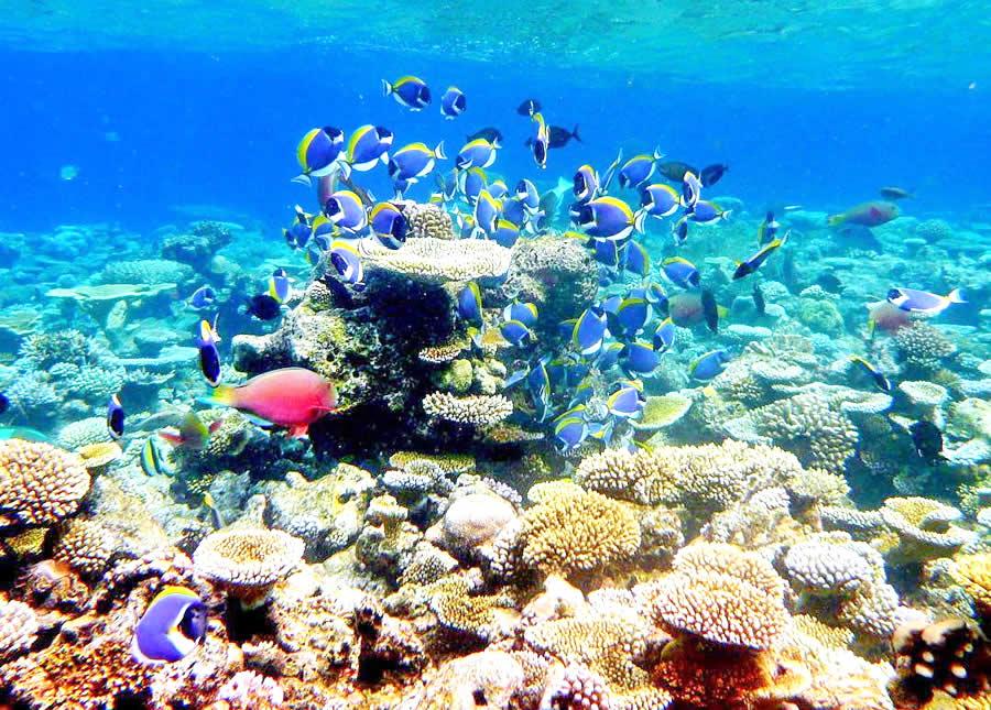 oblu  sangeli house reef