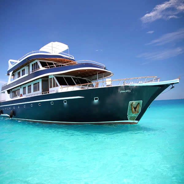 liveaboard in maldives