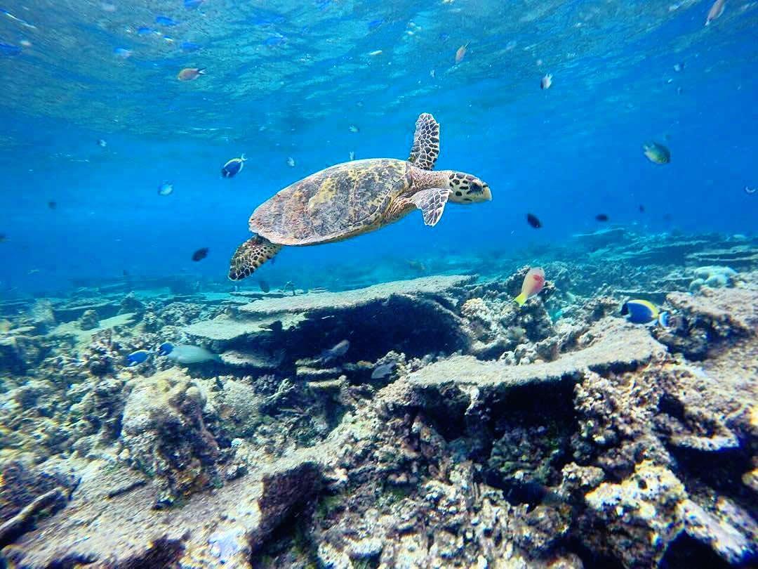 пляж на мальдивах и пальмы + черепаха в воде