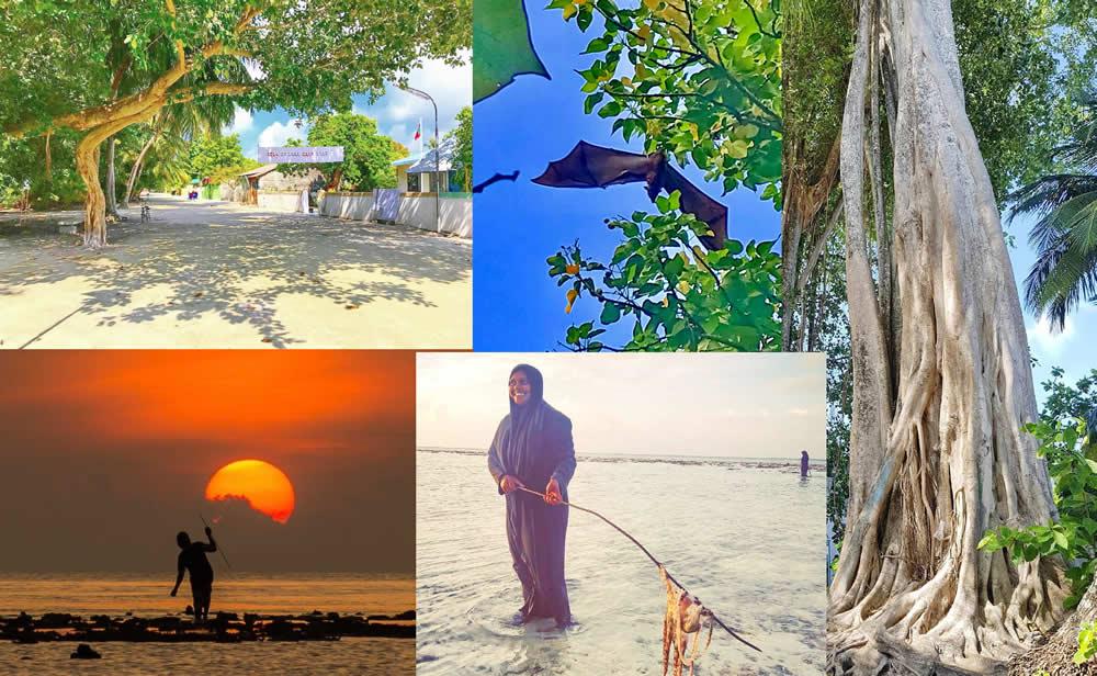 Omadhoo (Омаду)   - жизнь мальдивского острова