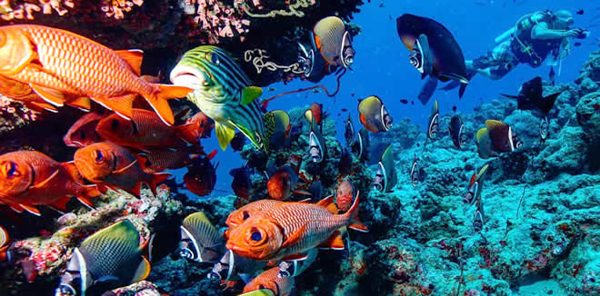 most popular dive sites in Maldives