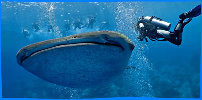 Scuba Diving in Ari Atoll