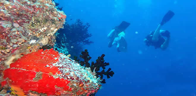 Scuba Diving in Laamu Atolls