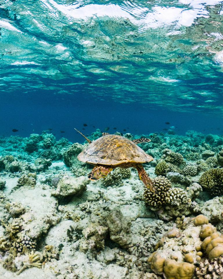 Guided Snorkeling  with a myriad of colourful fish