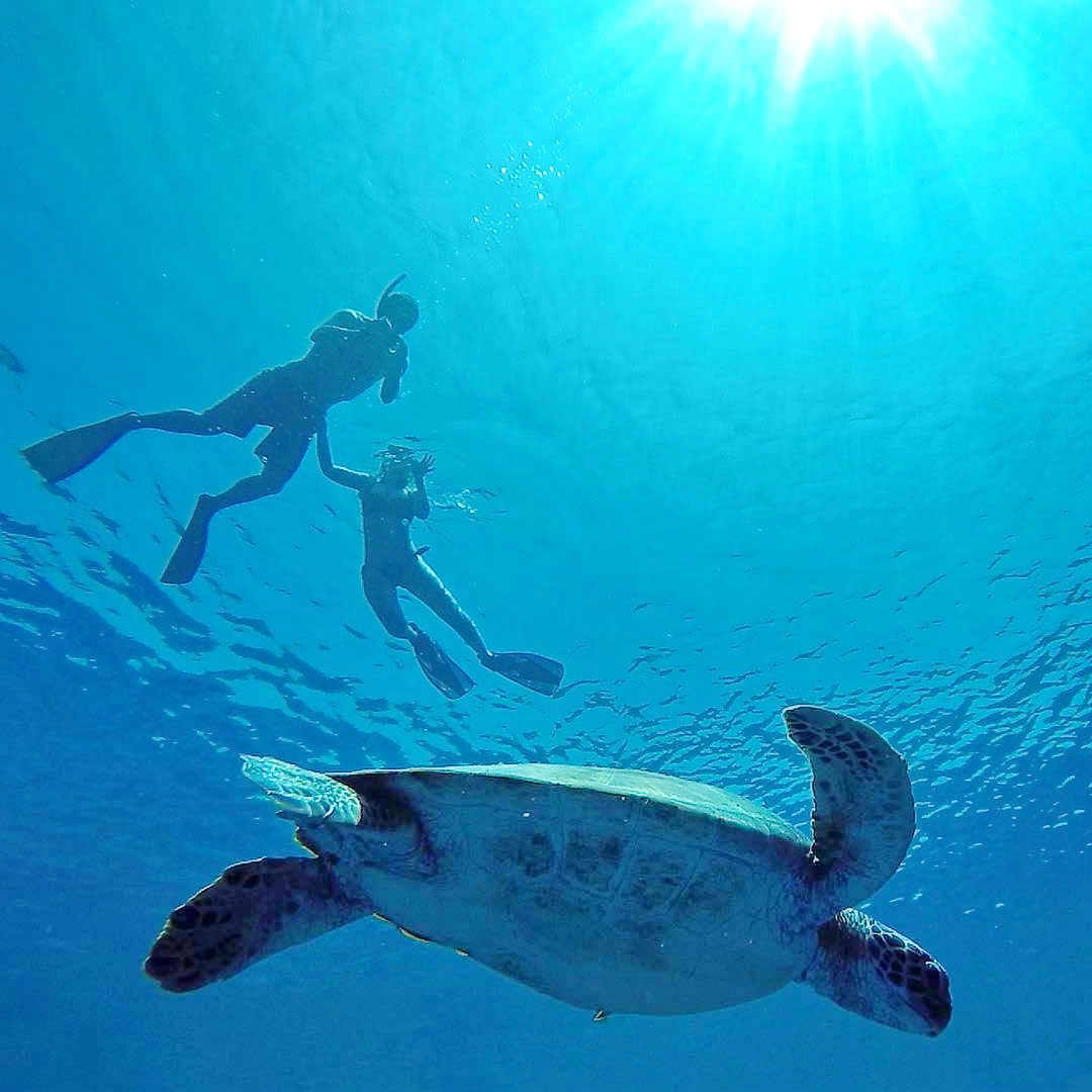 Guided Snorkelling Excursions in the Maldives