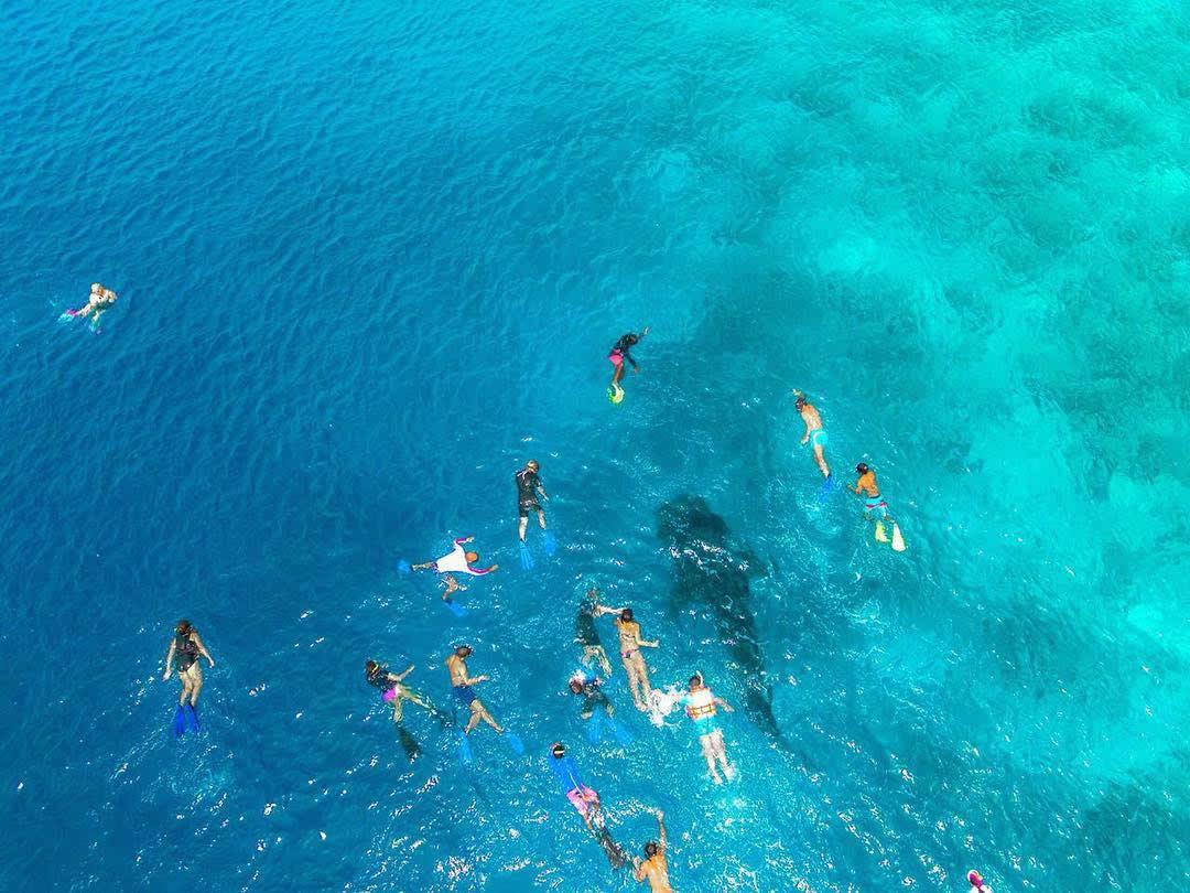 снорклинг с китовыми акулами, дигура
